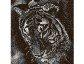 Тигр монохром (фотостежок)
